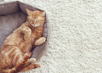 A PET-OWNER'S GUIDE TO CHOOSING CARPET